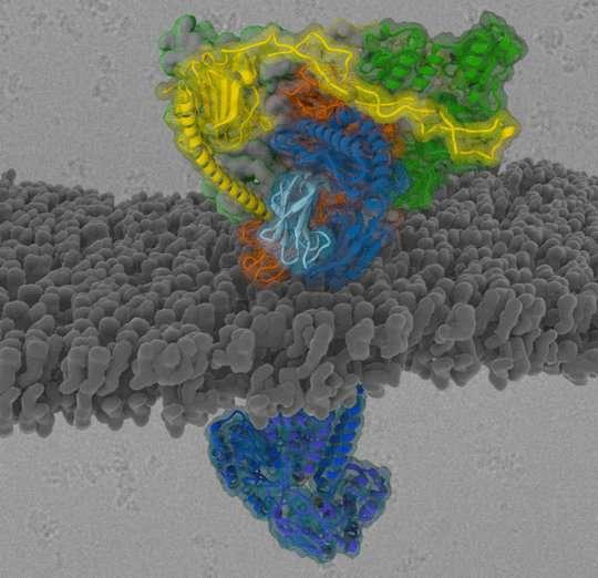 Information filter for immune defence
