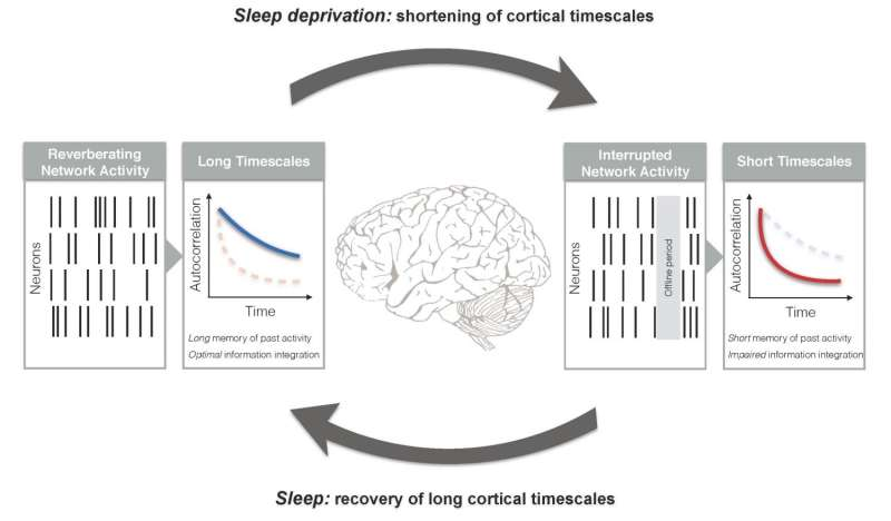 Information processing breakdown in sleep-deprived rats