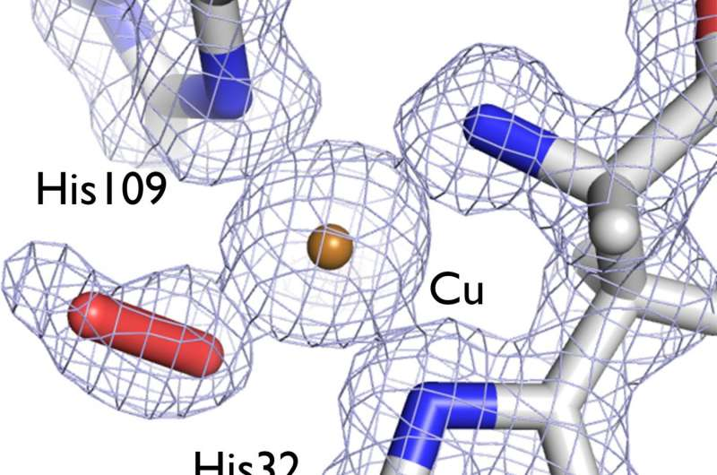 Insight into enzyme's 3-D structure could cut biofuel costs