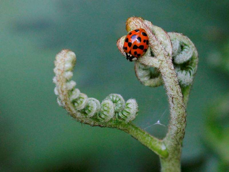 Invasive species on the rise globally