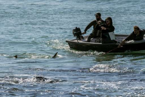 Israeli authorities have issued warnings to protect both the public and the sharks from close and potentially lethal encounters