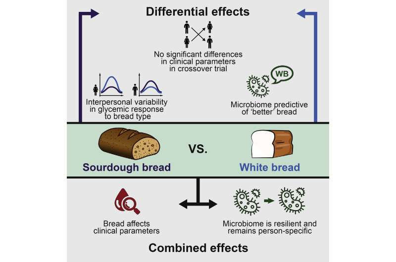 Is white or whole wheat bread 'healthier?' Depends on the person