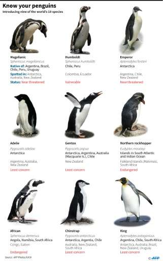 Know your penguins - nine of the world's 18 species of penguins
