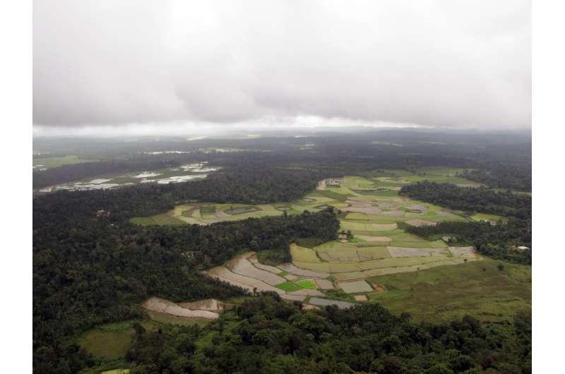 Laissez-faire is not good enough for reforestation