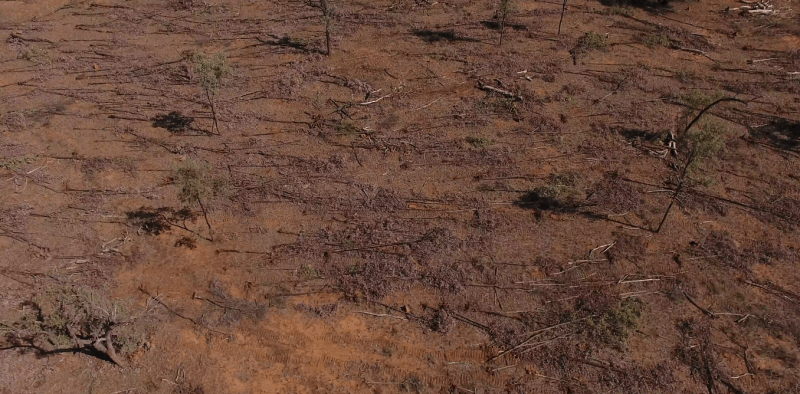 Land clearing on the rise as legal 'thinning' proves far from clear-cut