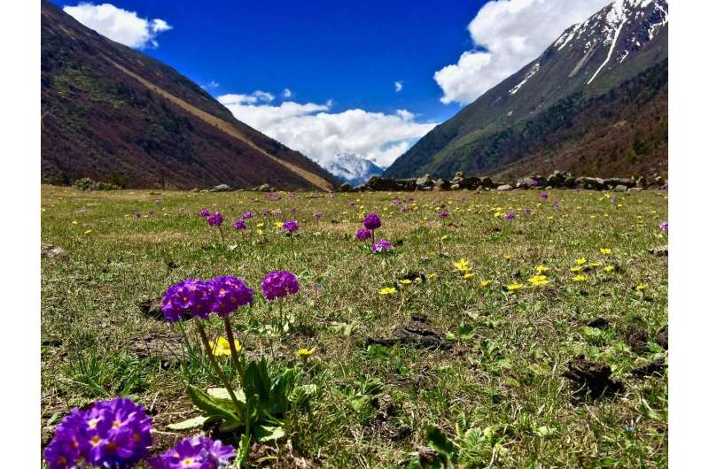 Laws of attraction: Pollinators use multiple cues to identify flowers across continents