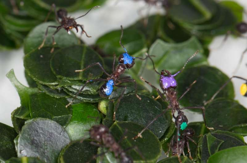 Leaf-cutting ants learn to identify unsuitable plants from cues within the colony