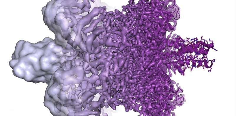 Life frozen in time under an electron microscope gets a Nobel Prize