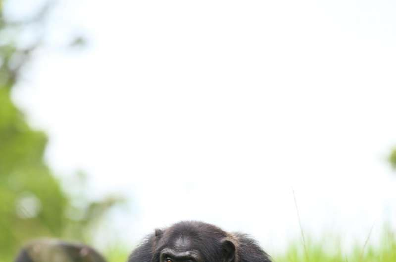 Looking for trouble: Territorial aggressions and trespasses pay off among primates