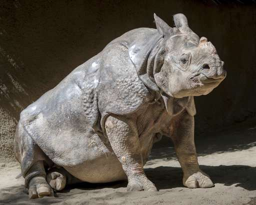 Los Angeles Zoo's old Indian rhinoceros euthanized