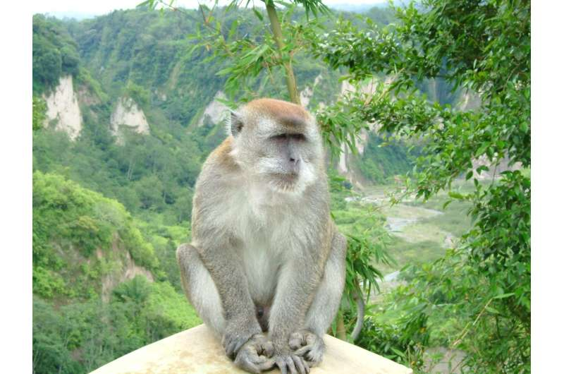 Macaques learn to crack open oil palm nuts with rocks in just 13 years
