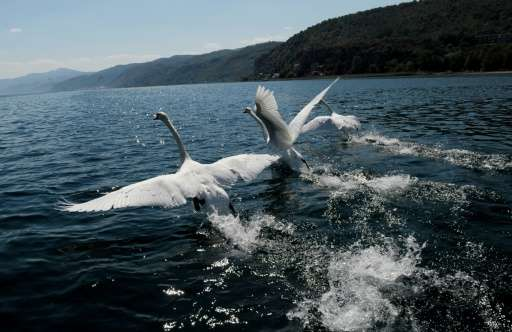 Macedonia's Lake Ohrid is three million years old and home to more than 200 species of flora and fauna found nowhere else in the