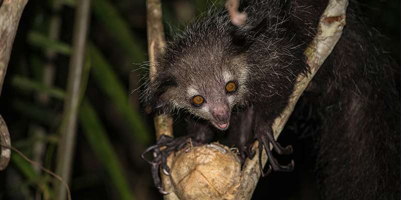 Magical creatures help conservation
