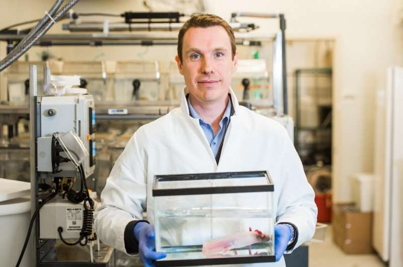 MDI Biological Laboratory study finds immune system is critical to regeneration