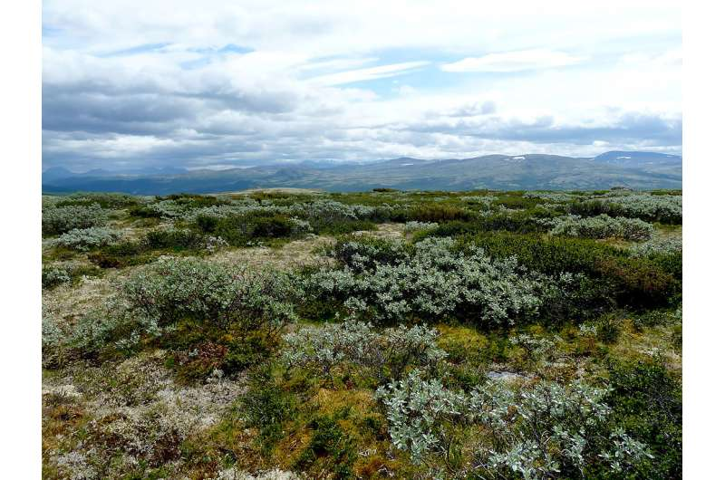 Meadows beat out shrubs when it comes to storing carbon