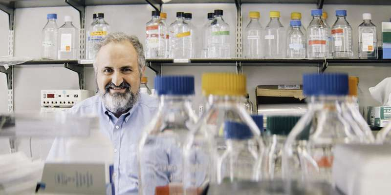 Mechanism identified of impaired dendritic cell function that weakens response to cancer