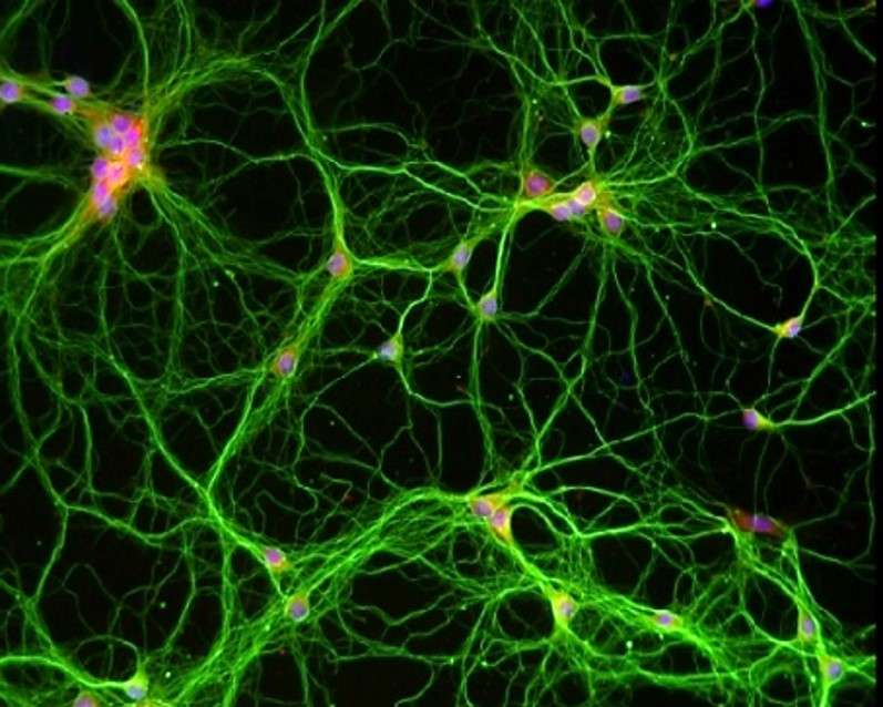 Metabolic enzyme fuels molecular machinery of memory
