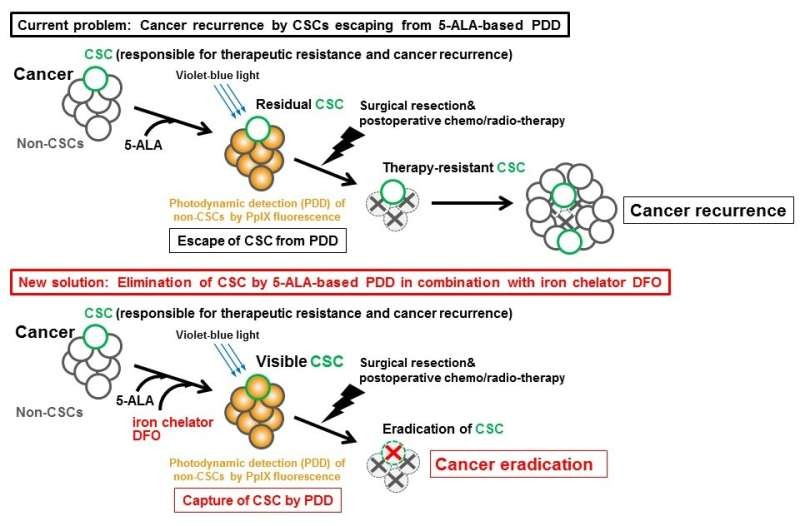 Method identified to boost detection of highly cancerous stem cells