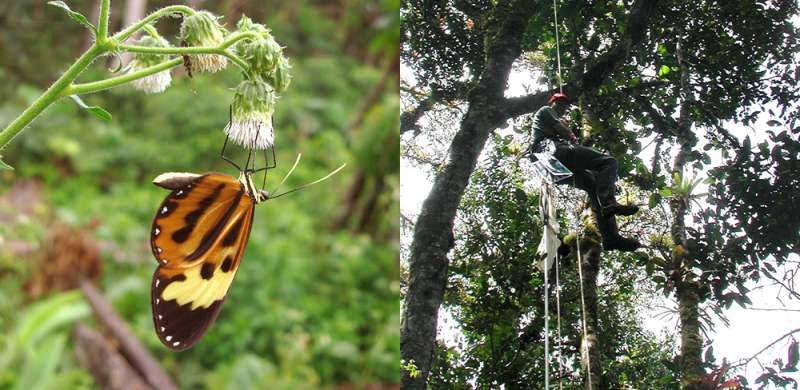 Microhabitats enhance butterfly diversity in nature's imitation game
