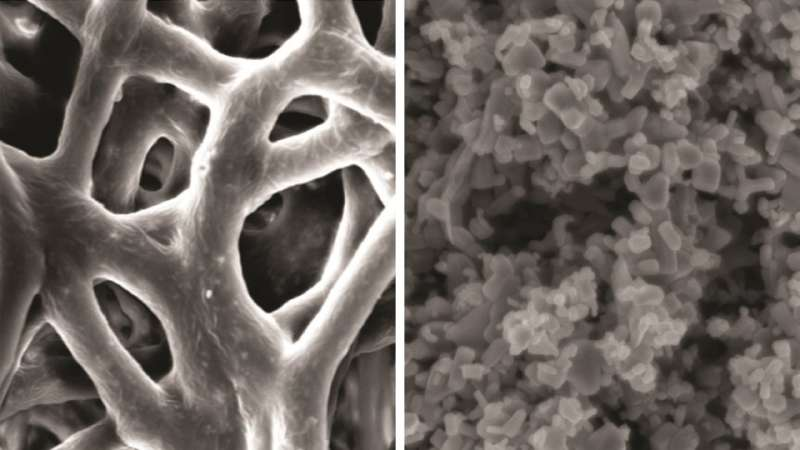 Microscopic membrane could fight gum disease
