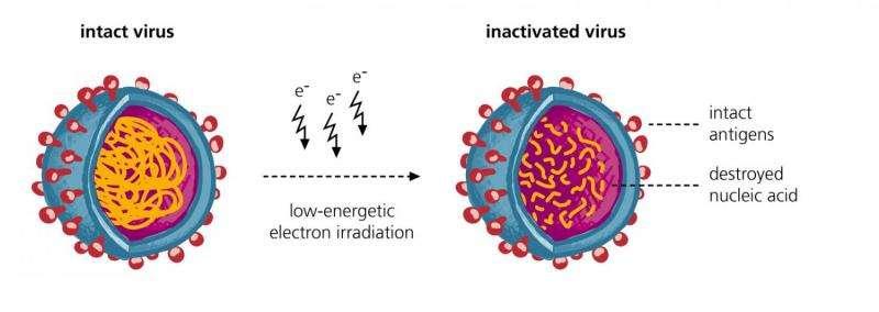 More efficient vaccine production