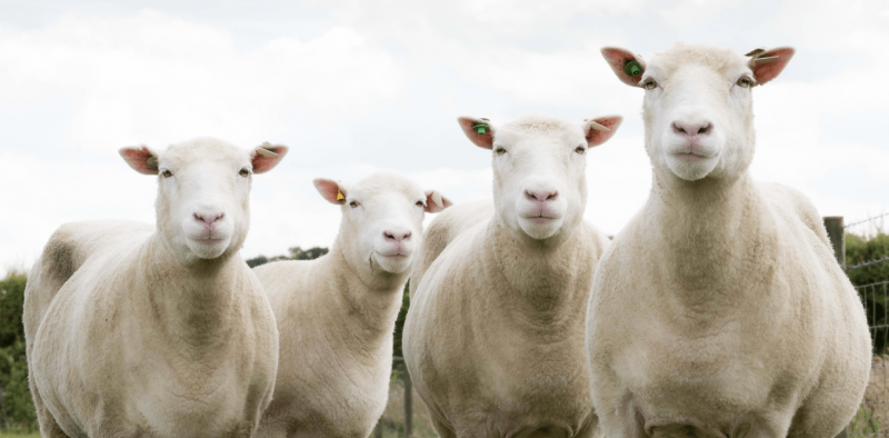 More lessons from Dolly the sheep—is a clone really born at age zero?