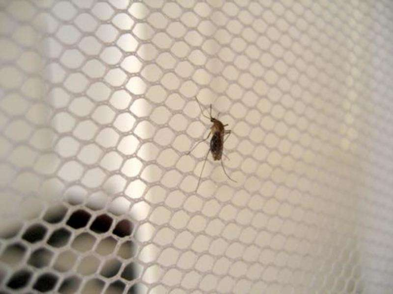 Mosquito discovery sheds light on how malaria is spread in South Africa