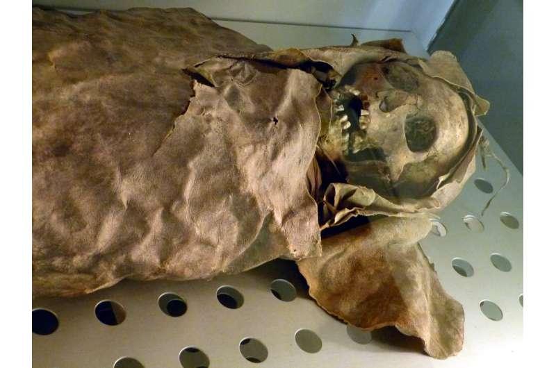 Mummies' tummies to reveal digestive evolution