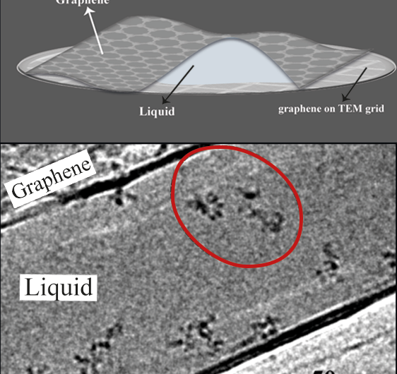 Naked molecules dancing in liquid become visible