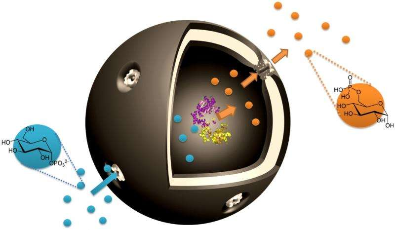 Nanocapsules enable cell-inspired metabolic reactions