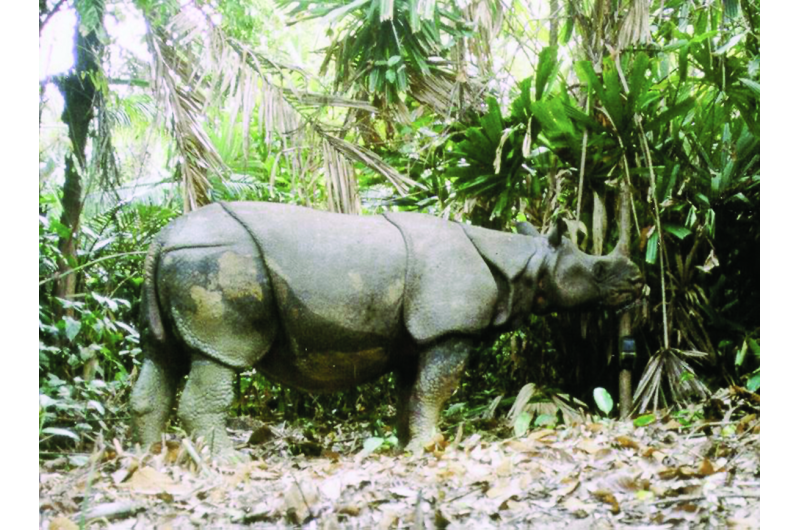 Natural disasters pose grave threat to planet's last Javan rhinos