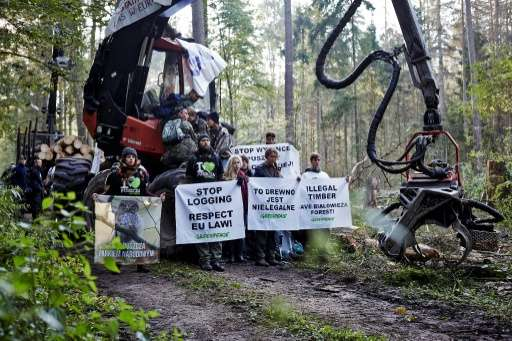 Nearly 150,000 people have signed an online letter supporting protesters against Bialowieza logging