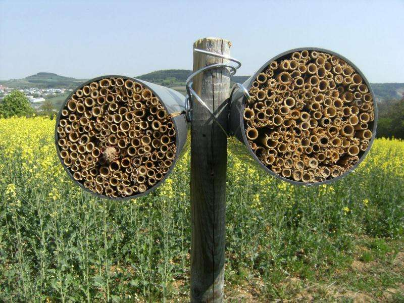 Nesting aids make agricultural fields attractive for bees