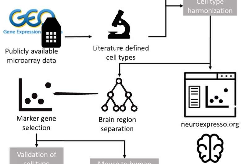 NeuroExpresso: Web app enables exploration of brain cell types