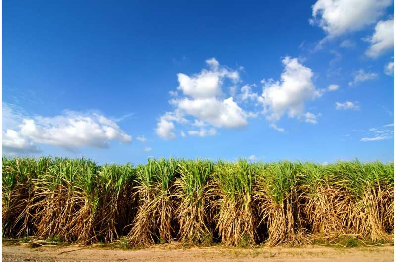 New 3-D model predicts best planting practices for farmers