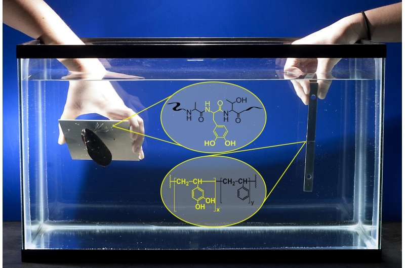 New 'biomimetic' glue shows high-strength bonding under water