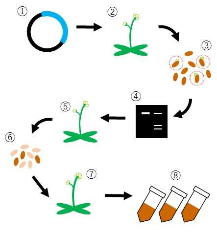 New bioresources for plant peptide hormones using gene editing technology