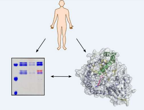 New cellular imaging paves way for cancer treatment