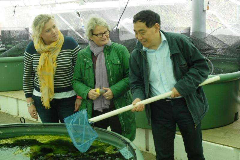 New diet for farmed barramundi fish