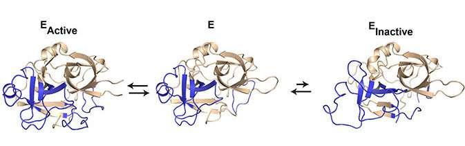New knowledge about the dynamics of proteins can shape the future in drug development