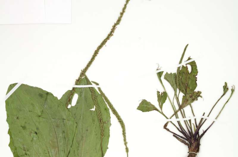 New life for 19th-century plants