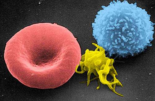 New methods reveal the biomechanics of blood clotting
