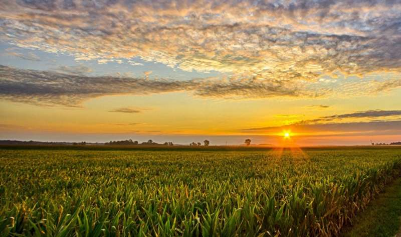 New MSU research addresses gap between research and practice in sustainable agriculture