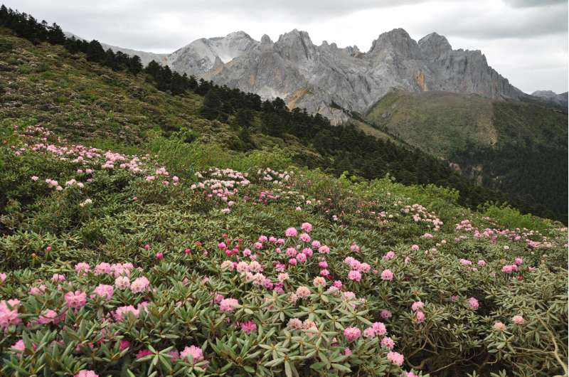 New species evolve faster as mountains form