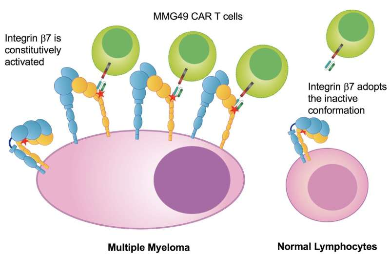 New strategy for multiple myeloma immunotherapy