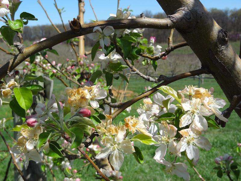 New tool gives apple farms hope in fight against spring freezes