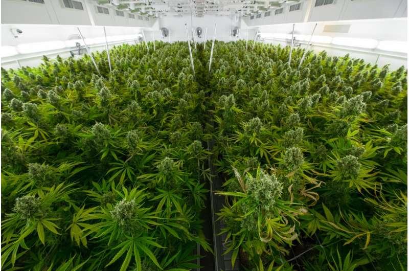 Noted experts critically evaluate benefits of medical marijuana for treatment of epilepsy
