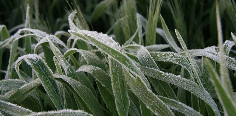 Not just heat—even our spring frosts can bear the fingerprint of climate change