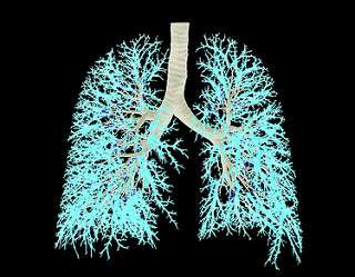 Novel glimpses into early lung development
