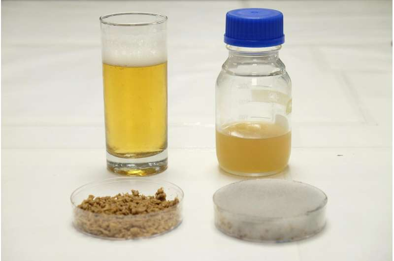 NTU scientists use brewery waste to grow yeast needed for beer making